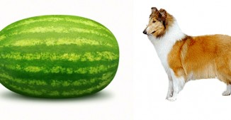 Melon-Collie. Depression & Diet